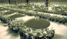 All That You Need to Know About Building an Indoor Growing Room for Cannabis