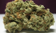 What's in a Name but Super Skunk Is Truly Great