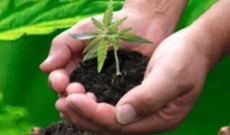Best Guide to Marijuana Seeds on the Internet