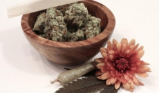 Your Most Asked Question: When to Harvest Your Cannabis Plant
