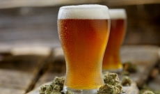 Is Cannabis Safer than Alcohol?: The Case for the Cali-Sober Lifestyle