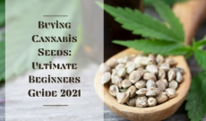 Buying Cannabis Seeds: Ultimate Beginners Guide 2021