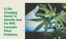 5 Life-Changing Hacks To Identify And Fix 99% Cannabis Plant Problems