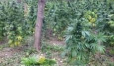 A Beginners Guide to Cannabis Guerilla Growing