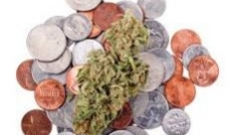 Top 3 Advanced Feminized Seeds in the Market Worth Your Money